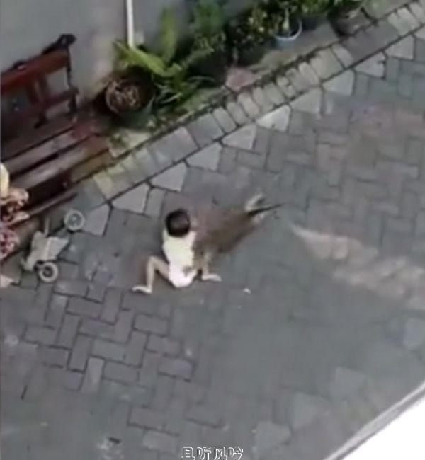 网传猴子骑自行车抢幼童,真相揭穿后众人大怒