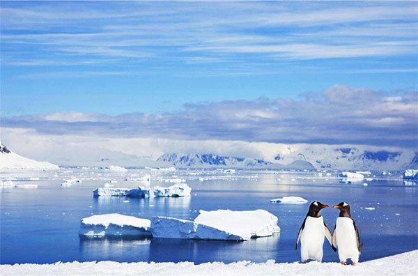 6人南极游因疫情被取消,60万团费仅退一半