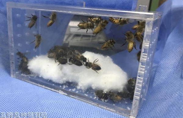 闻所未闻!丧心病狂!某城市医生居然用蜜蜂蜇患者